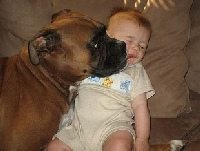 family dog licking baby