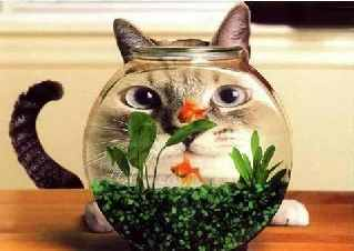 kitty looking through goldfish bowl