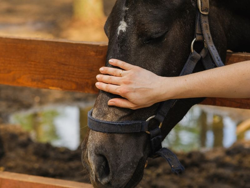 Woman's hand petting horse