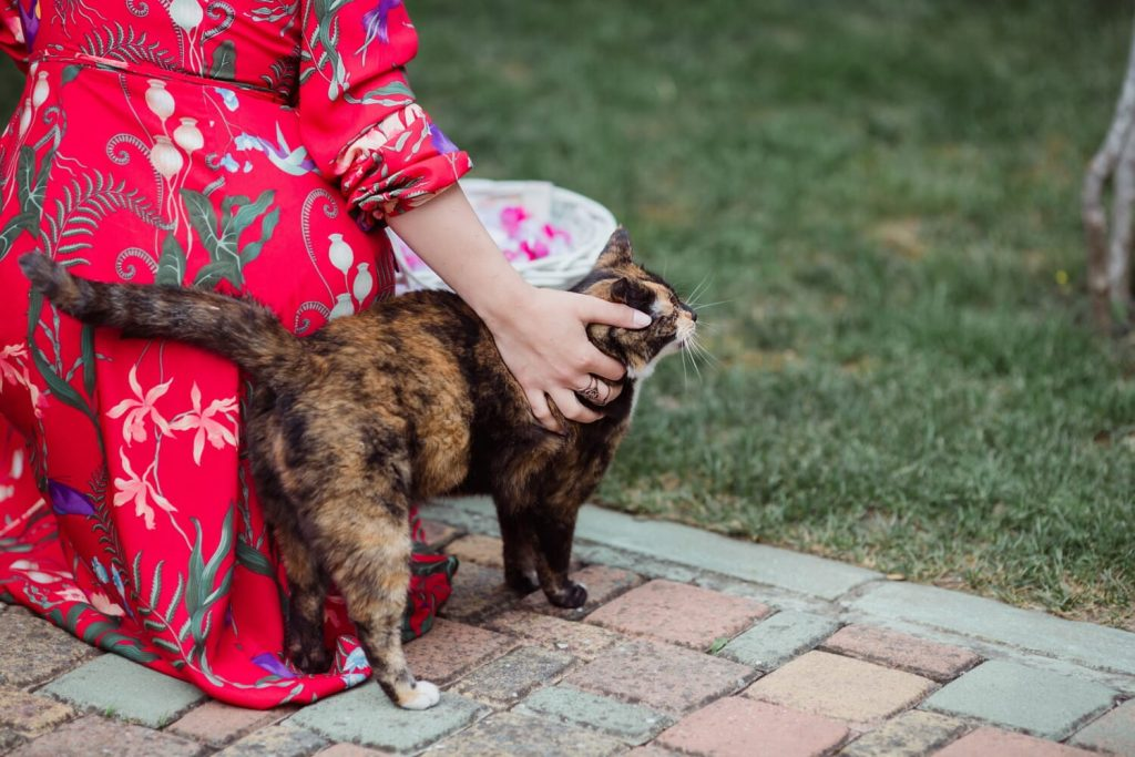 Loss Of Pet: Tell Us About Your Lost Pet