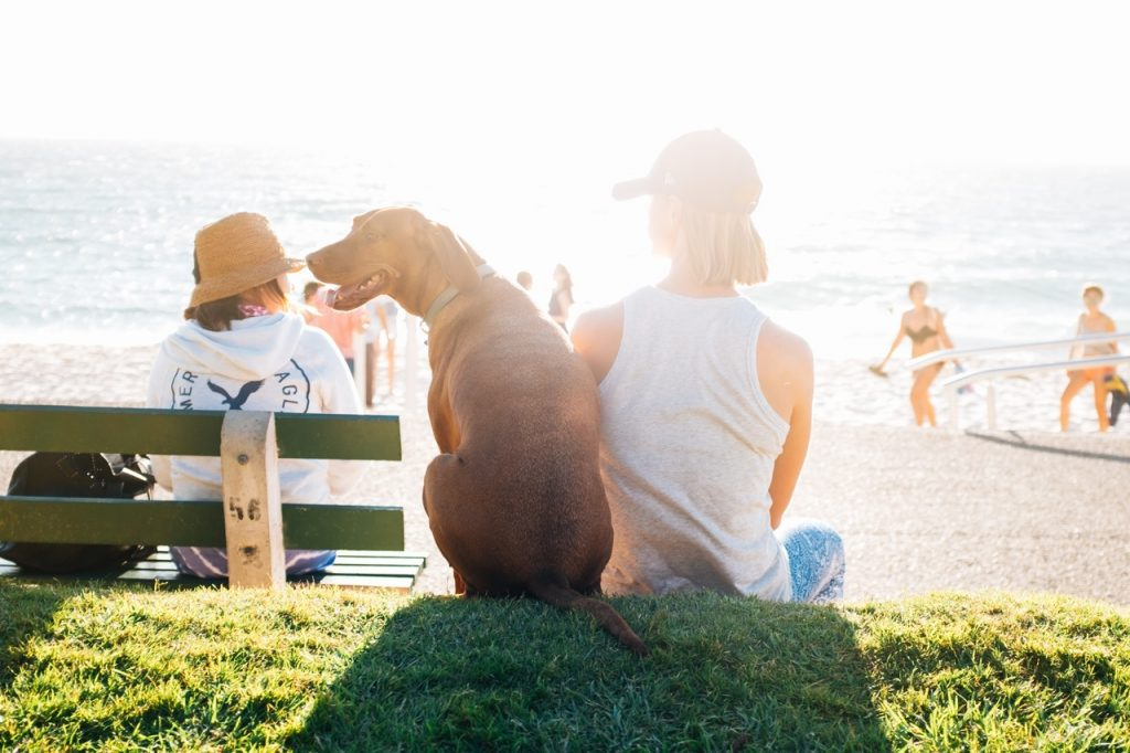 Sympathy Loss Of Pet – How To Support Your Grieving Friend